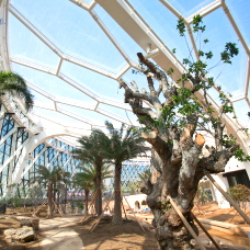 Visit Korea's Largest Greenhouse at Seoul Botanic Park