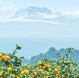 Escalar hasta la cumbre del monte Hallasan de Jeju y recibir un sello que acredita la ascensión