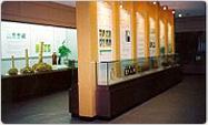 韓国竹博物館