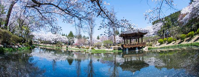 【慶尚北道】新羅の歴史を訪ねる慶州満喫コース(1泊2日)
