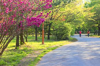平和の公園散歩道