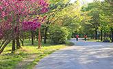 平和の公園