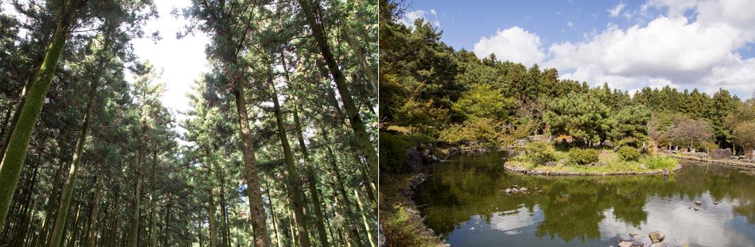 좌)높이 30~40m에 이르는 삼나무들을 올려다 본 모습, 우)휴양림 내 연못과 연못 한 가운데 떠 있는 섬