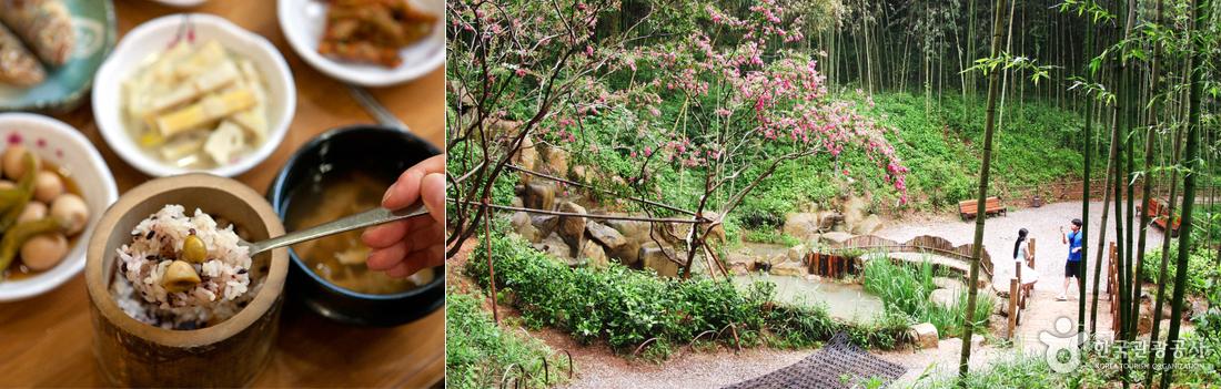 좌)대통밥과 밑반찬, 우)녹음이 우거진 죽녹원 풍경