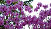 지도 한 장 들고 떠나는 봄꽃 여행! 2014 봄꽃지도 사진