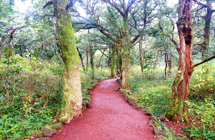 Прогулочные дорожки в лесу Пичжарим