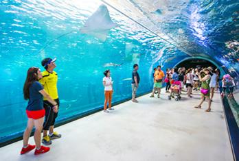 Подводный тоннель в океанариуме (снизу справа)