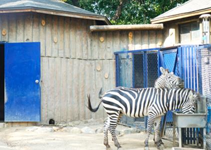 Зоопарк в Парке Тальсон (справа)