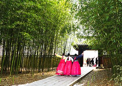 дорожка вдоль бамбуковых зарослей