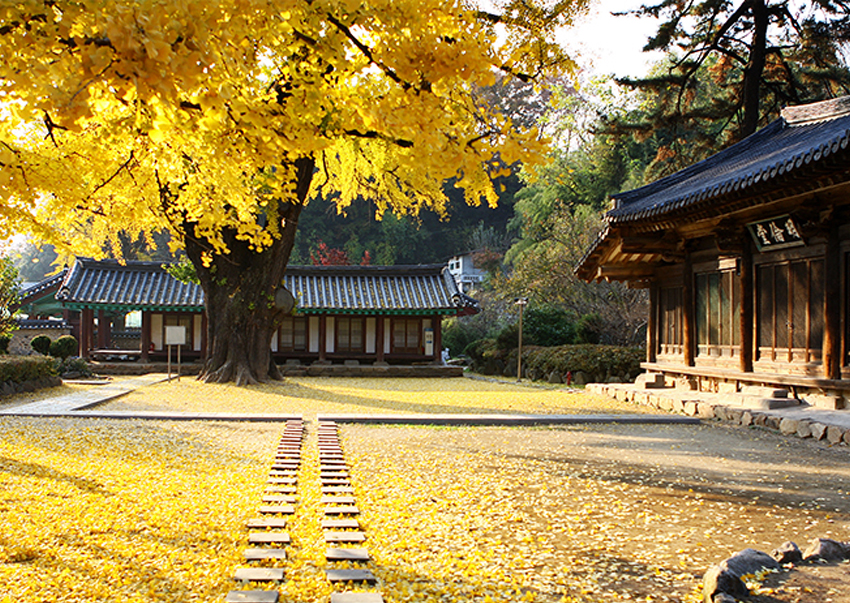 Осенний пейзаж в школе Чончжу Хянгё (фото предоставлено: мэрия Чончжу)