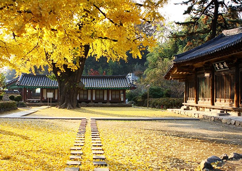 Jeonju Hyanggyo (cortesía del Ayuntamiento de Jeonju).