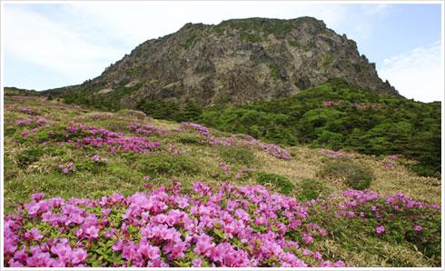 漢拏山天然保護区域(ハルラサンチョニョンポホグヨク