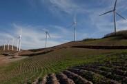 매봉산풍력발전단지(바람의언덕)와 고랭지배추밭