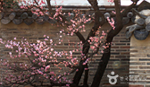 2015 봄꽃축제! 봄 바람에 엉덩이가 씰룩 씰룩!