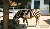 전국 동물원&체험공원 지도 우리 아이가 좋아하는 다양한 동물 체험! 어디로 갈까?