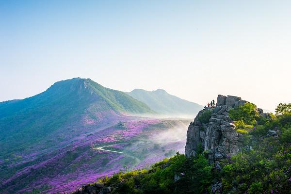 철쭉꽃으로 물든 황매산의 풍경