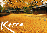 노란단풍이 어우러진 전주 한옥 포스터