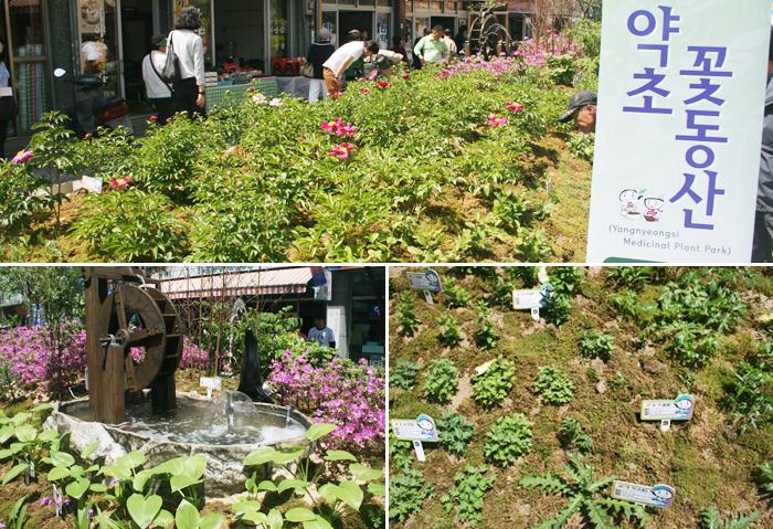 Baños Plantas Medicinales: plantas medicinales locales como ginseng, raíces de hwanggi (planta