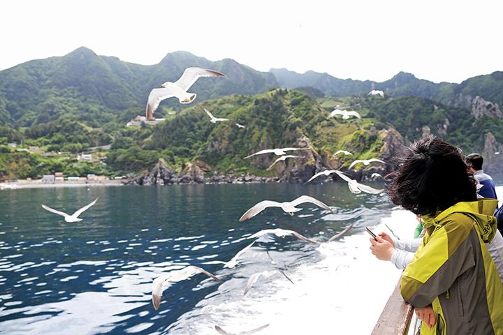 유람선에 탄 사람들 위로 수없이 날아가는 갈매기떼