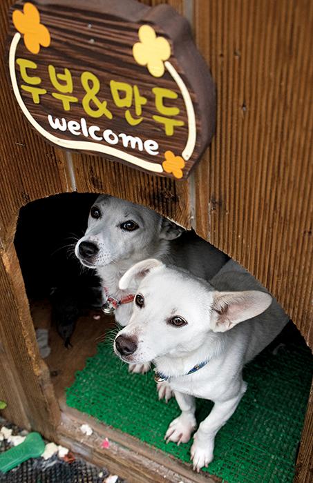 개집안에서 밖을 내다 보는 강아지 두마리, 두부와 만두