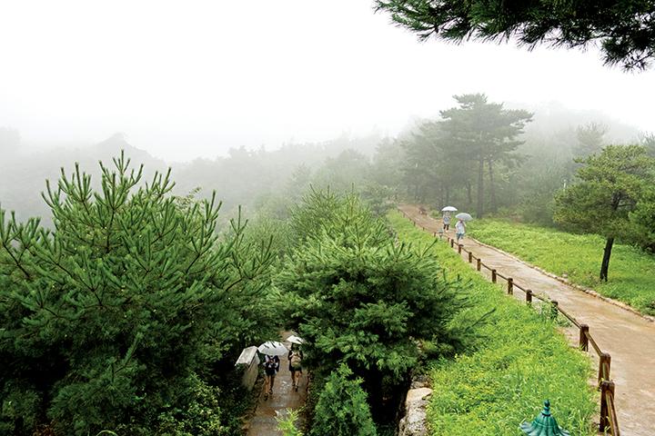 낙산사 산책로, 비가 내리고 있다