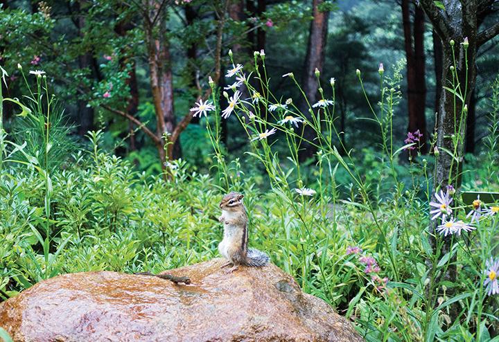 설악산자생식물원에서 만난 다람쥐