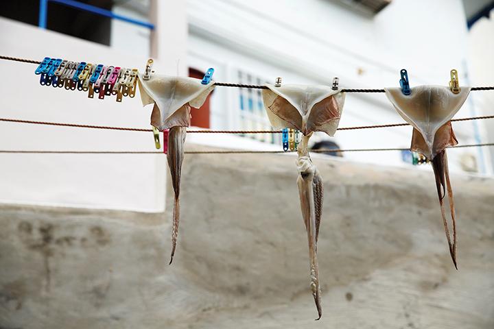 빨랫줄에 걸려 있는 반건조 오징어 세마리