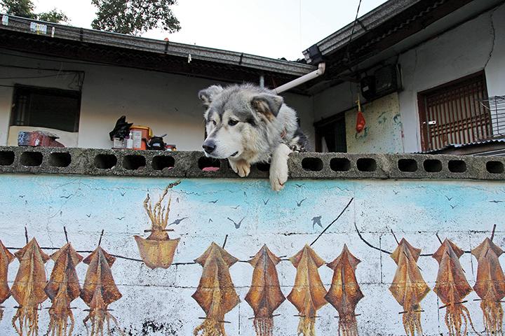 오징어 군단 담화집에서 만난 논골담길의 터줏대감, 담벼락을 붙잡고 밖을 내다 보는 큰 개 한마리