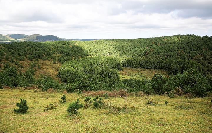 아부오름 삼나무 숲