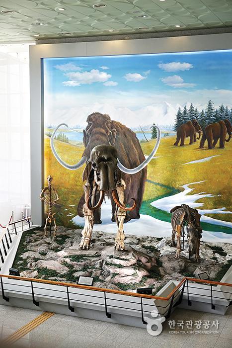 수양개선사유물전시관 로비에 전시돼 있는 매머드 화석 모형