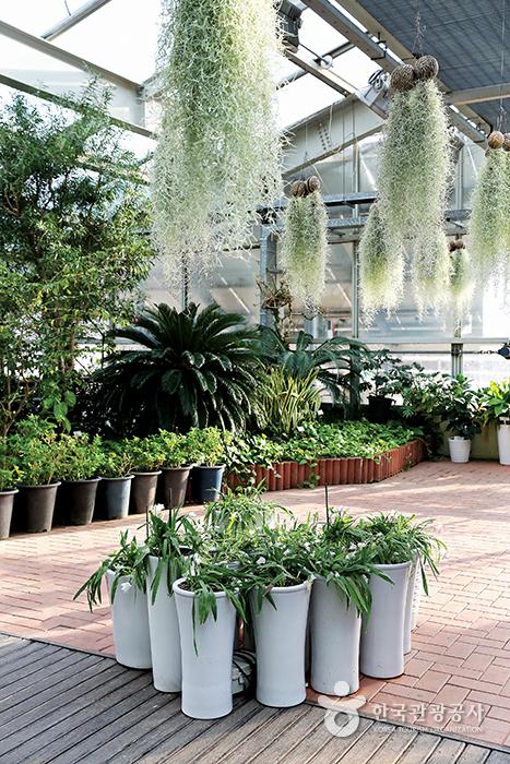 곤충식물원 내부, 여러 개의 화분과 공중식물