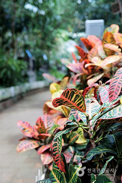 나비체험장 출구에 심어져 있는 잎이 화려한 크로톤