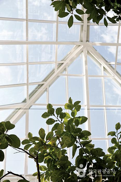 창경궁 대온실 내부, 통창으로 보이는 하늘