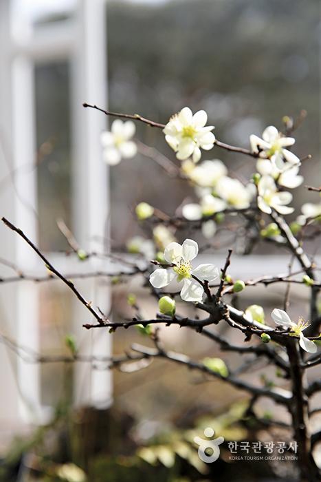 나뭇가지에 피어난 흰 꽃송이들