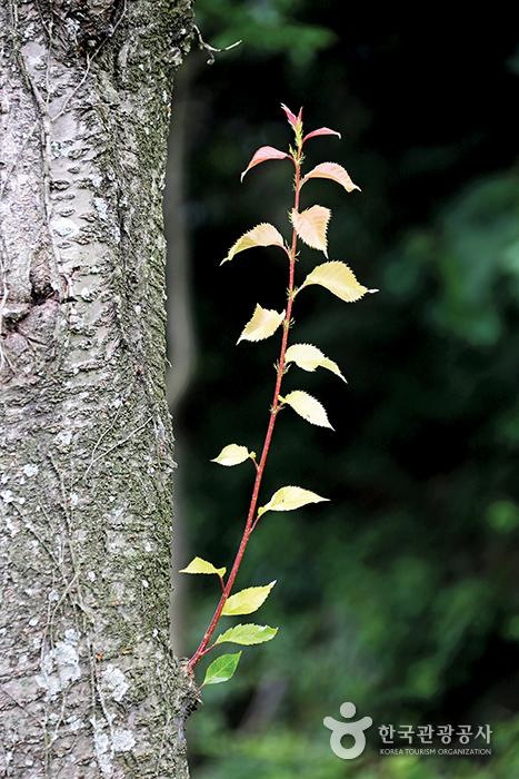 초록빛 잎을 피운 곁가지
