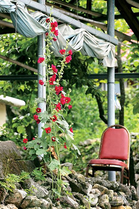 줄기따라 빨간색 꽃이 피어난 곳 옆에 낡은 의자 하나
