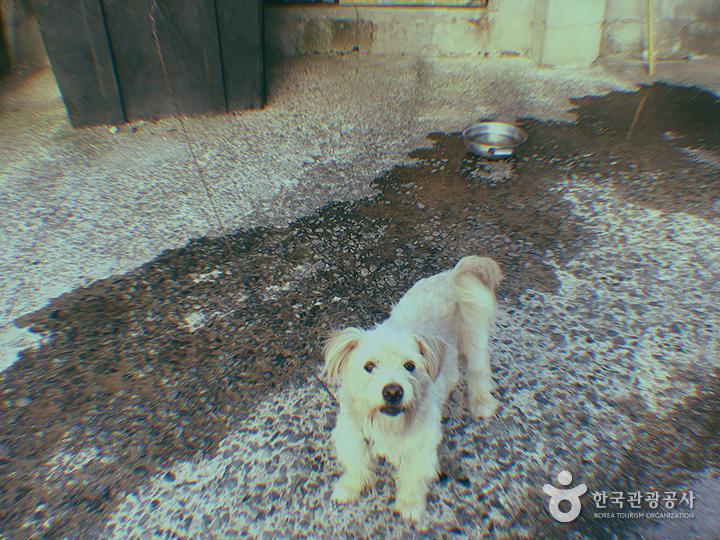 마당에 묶여있는 개 한마리
