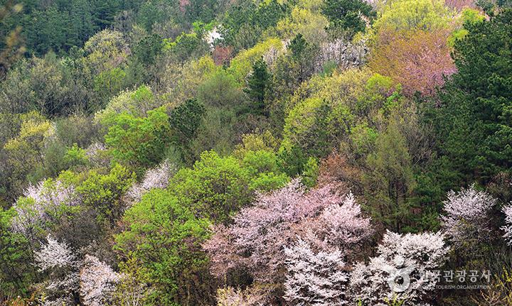 봄꽃으로 물든 산 풍경