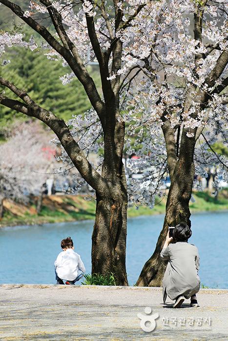 제천 의림지의 봄을 즐기는 엄마와 아들