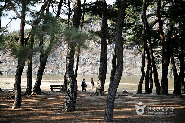 하회마을 소나무숲