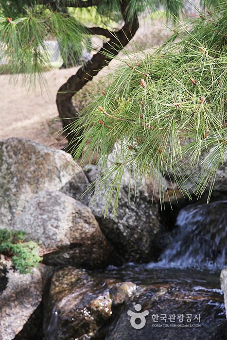 소나무 옆에서 흐르는 작은 개울