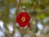나의 여행 버킷 리스트 동백섬 지심도를 만나다! 전경