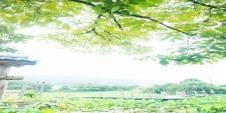 [서천 여행지] 휴식과 힐링을 주는 곳, 서천식물예술원