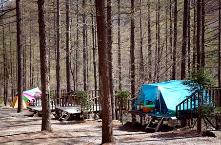 때묻지 않은 숲속 7성급 오토캠핑장, 청옥산자연휴양림캠핑장
