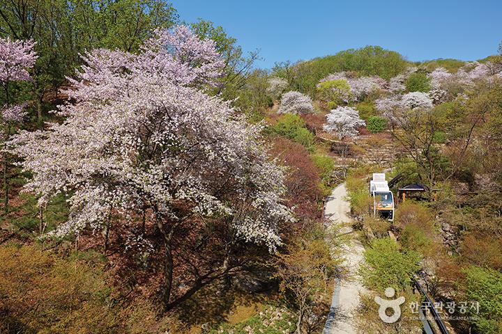 남한강 따라 봄꽃 여행