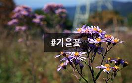 청명한 가을 날, 고운 꽃 만나러 가는 길