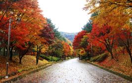 가을빛 담은 나무들이 주인이 되는 시간, 청남대