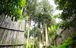 정남진 편백숲 우드랜드
