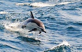 외국이야? 해외 같은 국내 여행지, '울산'으로 고래 만나러 가요!