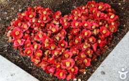 붉디 붉은 동백꽃이 아름다운 곳, 부산 해운대 꽃피는 동백섬